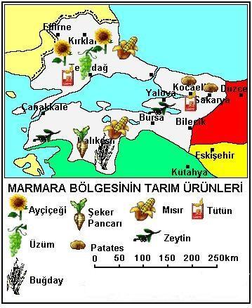 marmara bölgesi tarım ürünleri haritası
